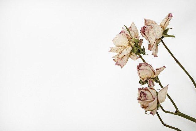 suszone kwiaty w ramce